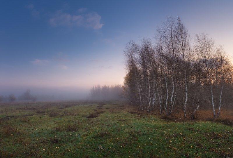 пейзаж, осень, утро, туман, березы, луг, лес, роща, меланхолия, панорама, birch, trees, road, fog, landscape, fall, morning, autumn, misty, colors, meadow, forest, panorama, foggy, wood, season, melancholy, sadness Осенняя меланхолия ..photo preview
