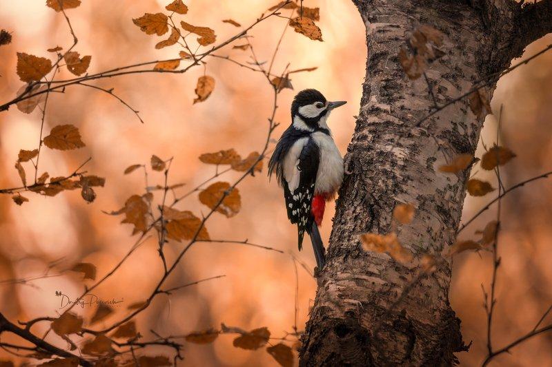 природа, лес, поля, огороды, животные, птицы, макро Осеннее настроениеphoto preview