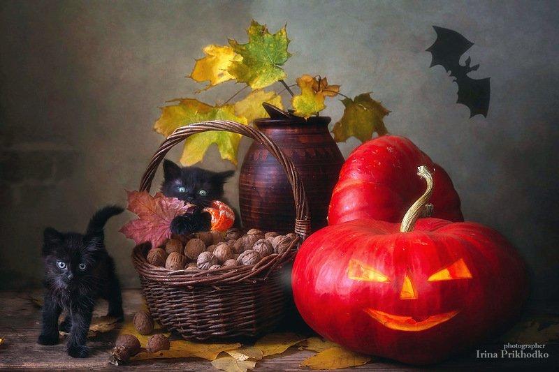 натюрморт, зоонатюрморт, котонатюрморт, котята, хэллоуин, постановочное фото, осень, тыквы, джек-фонарь Мы- ужас, летящий на крыльях ночи!photo preview
