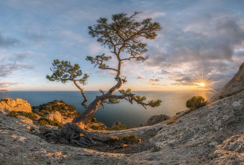 крым, новый свет, пик космос, сосна, осень, вечер, закат Однажды теплым вечером в Крымуphoto preview