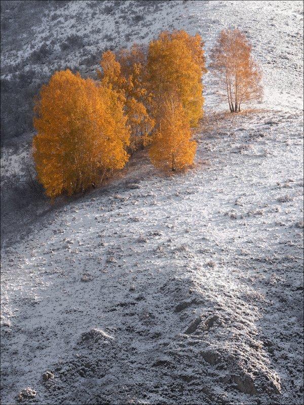алтай, алтайский край, осень Осеннее первоснежье ..photo preview