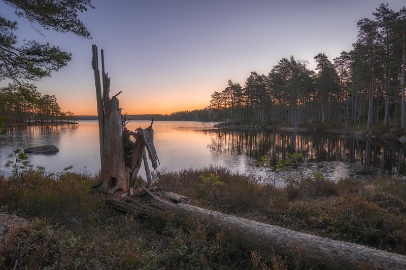 beforesunrise, blueberrybushes, fallentree, fir, firtree, heather, lake, laxå, ling, lingonberrybushes, marshland, morning, morningglow, moss, nordiclight, oerebrolän, outdoors, Pine, pinewood, Scandinavia, sunrise, Sweden, tiveden, tivedennationalpark, t Brokenphoto preview