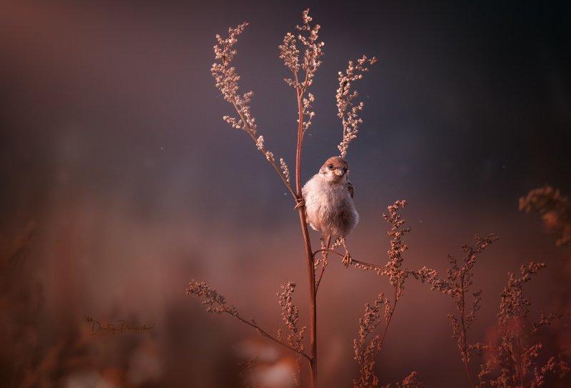 природа, лес, поля, огороды, животные, птицы, макро Смотрящий на районе фото превью