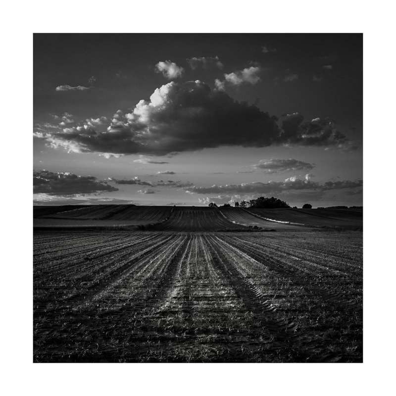 black&white, landscape, field, nature, dark One day in the fieldphoto preview