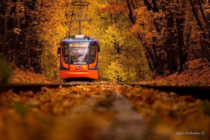 осень, москва, трамвай, сокольники Осенний трамвайphoto preview