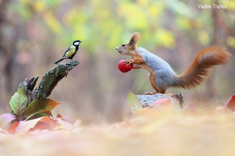 белка, squirrel, птица, яблоко Я вас слушаюphoto preview