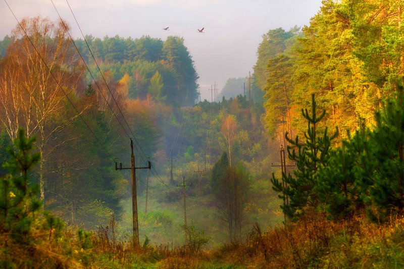 Nature  Forest  Calm  Sky  Beauty in nature  Landscape - Scenery  Trees  The birds  light  Landscape  Nikon The beauty of Polish forestsphoto preview
