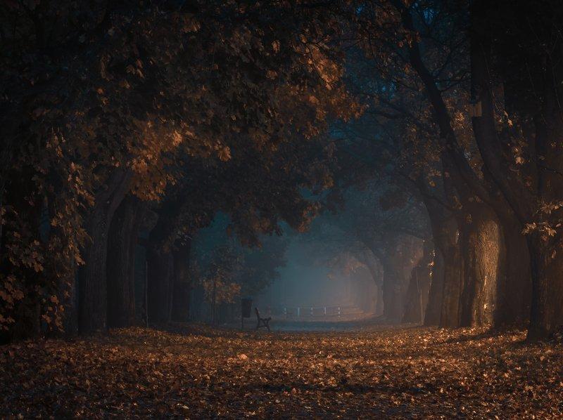 Mgła  Natura  Jesień  Liść  Żadnych ludzi  Krajobraz - Sceneria  Aleja drzew  Atmosfera  Nikon  Świt Go deeper and go straight aheadphoto preview