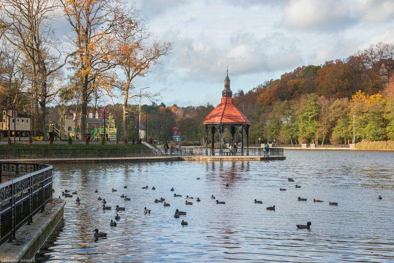 город, осень, городской пезаж, светлогорск Ноябрь в Светлогорскеphoto preview