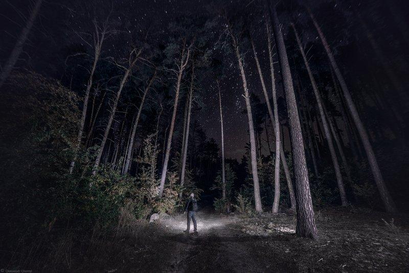 украина, коростышев, природа, лес, полесье, ночь, звезды, путник, странник, путь, жизнь, тишина, осознанность, присутствие, фотограф, чорный, Ночной тропою, встречая зориphoto preview