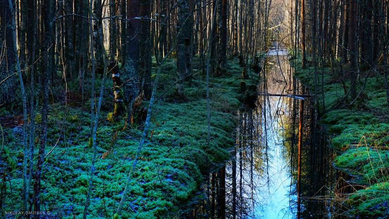 пейзаж лес. болото. 1-ый канал. 31.10.2020photo preview