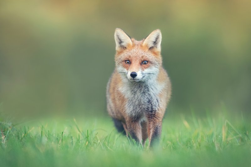 FOXphoto preview