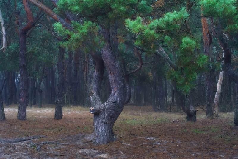 утро,туман,лес,деревья Утро в лесуphoto preview