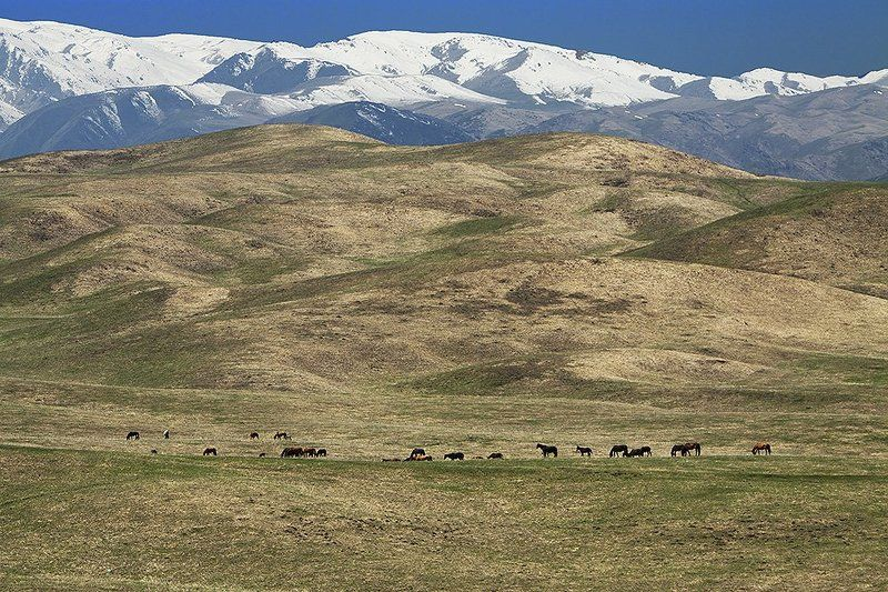 горы, пастбище, кони Джайляу IIphoto preview