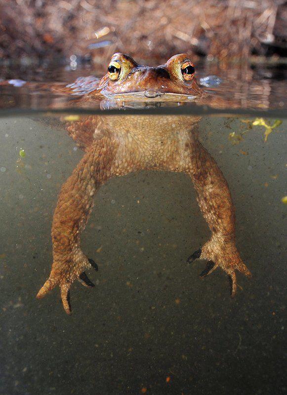 Майские жабыphoto preview