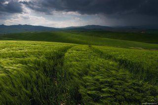Волны травы