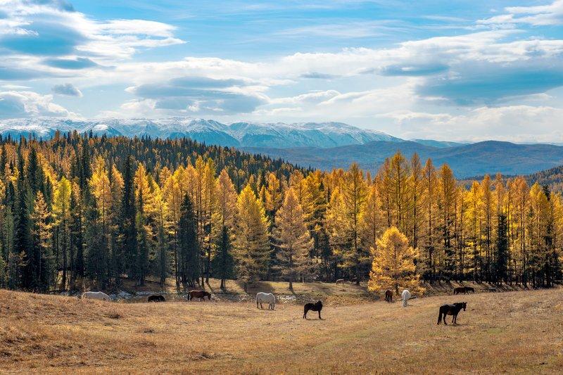 Алтайская осеньphoto preview