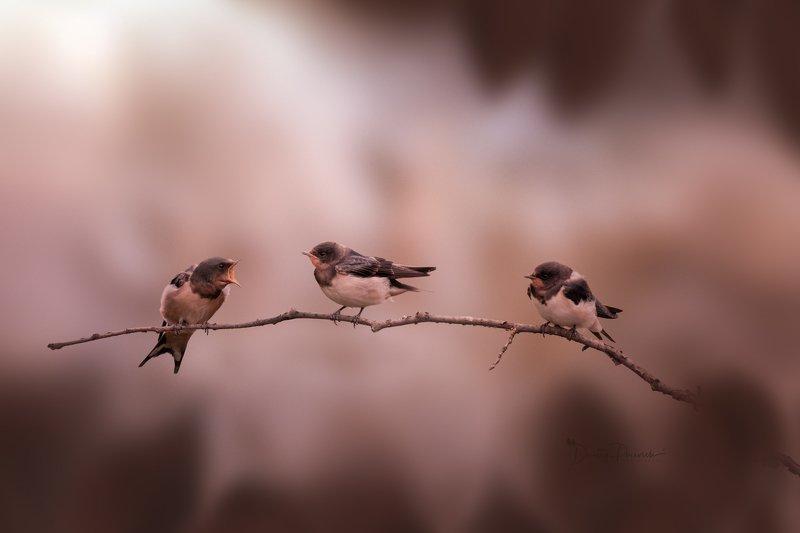 природа, лес, поля, огороды, животные, птицы, макро Ваня..., грозныйphoto preview