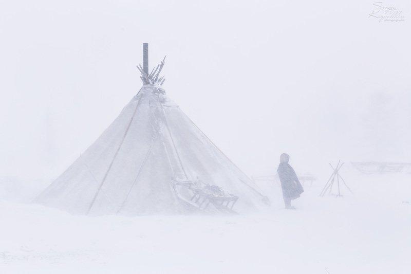 полярный урал, ямал, ненцы, оленеводы Пургаphoto preview