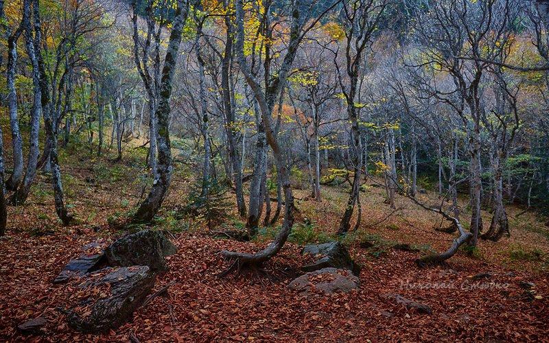 кавказ горы осень лес Осень в горном лесуphoto preview