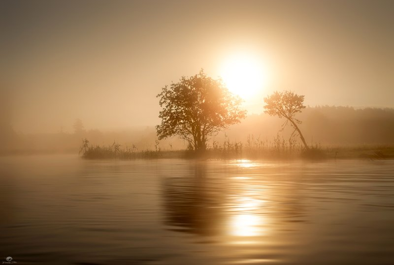 water, , mist, , trees, , landscape, , river, , gwda, , sky, , dawn, , sun, , forest, , mirror, , złota, godzina, , mgła A lonely kayak trip shrouded in fog and bathed in golden glowphoto preview