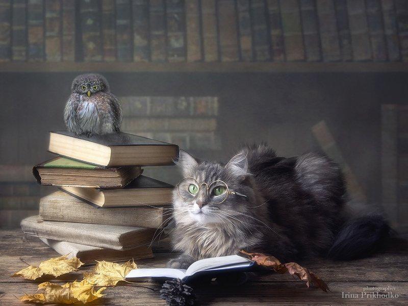 постановочное фото, котонатюрморт, кошка Масяня, библиотека, книги, зоонатюрморт -Учиться никому не рано и никогда не поздно!photo preview