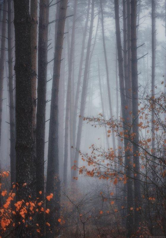 украина, коростышев, природа, лес, осень, октябрь, туман, полесье, тишина, осознанность, адвайта, милость, благодать, молчание, безмолвие, жизнь, деревья, фотограф, чорный, \