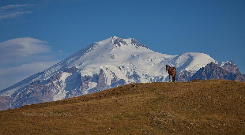 кавказ горы осень эльбрус конь Гора и лошадкаphoto preview