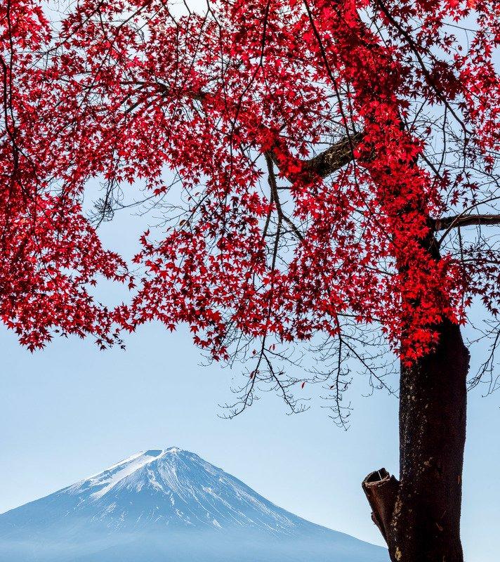 япония, фудзи, красный клен photo preview