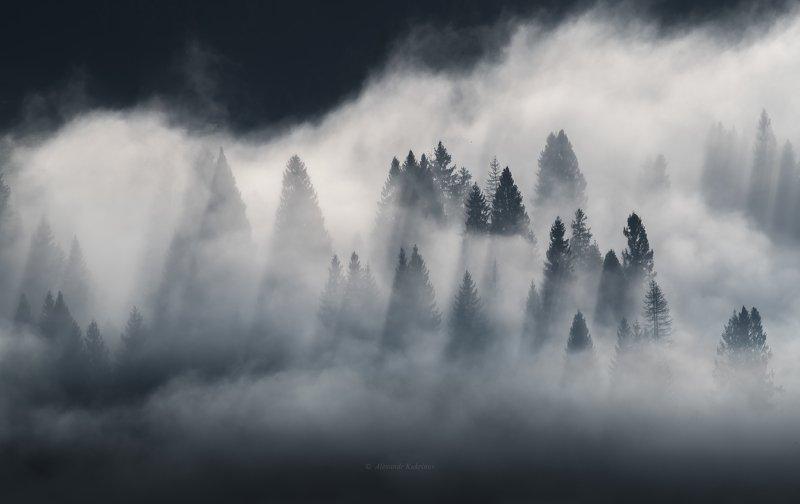 карпаты, утро, рассвет, туман, пейзаж Зачарованные стражи...photo preview