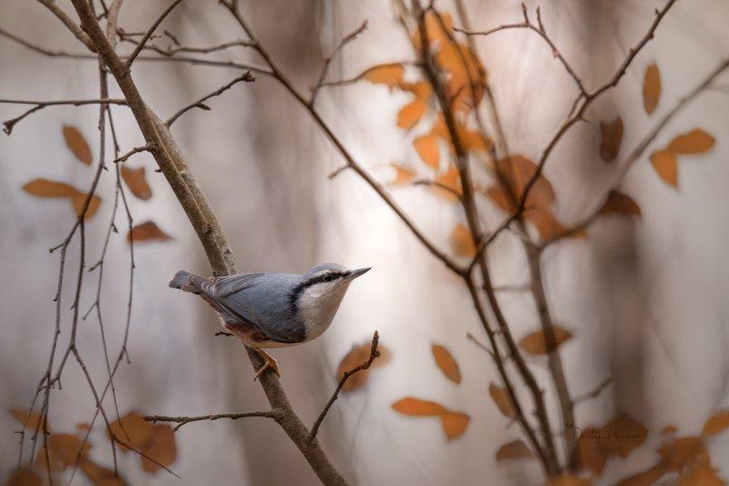 природа, лес, поля, огороды, животные, птицы, макро Осенняя поступь мягка и неслышнаphoto preview
