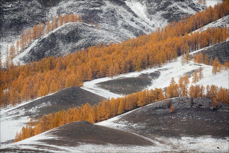 алтай, горный алтай, усть-кан, осень Графика Алтаяphoto preview