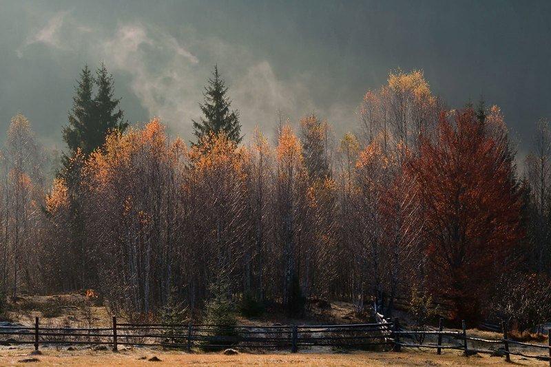 карпаты утро туман осень Скоро зима...photo preview