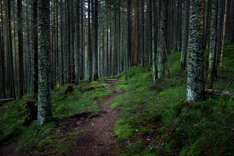 nature, autumn, landscape, forest, tatry, path pathphoto preview