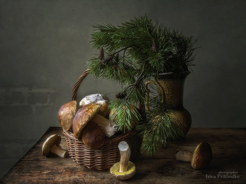 натюрморт, грибы, лесные, белые, корзина, сосновые ветки, художественное фото Прощальные дары осеннего лесаphoto preview