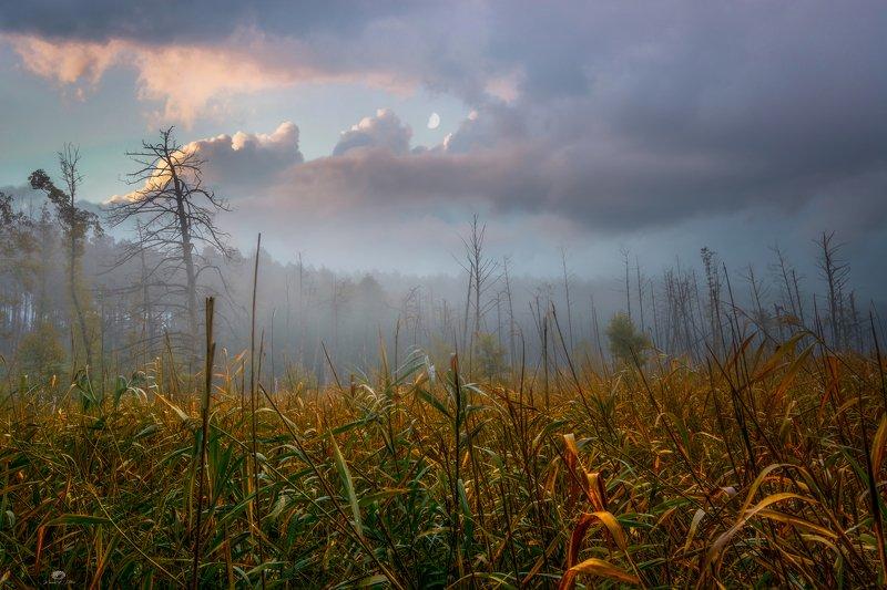 moczary, nikon, krajobraz, natura, drzewa, światło, księżyc, chmury, niebo, jesień, atmosfera, mgła, bagna, las Mysterious swamps in the fogphoto preview