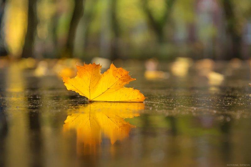 природа, осень Бабочка-осеньphoto preview