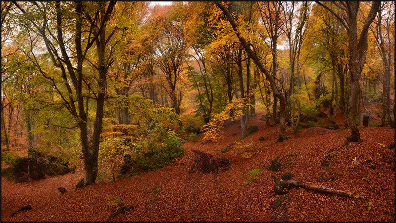 Ноябрь в Крымуphoto preview