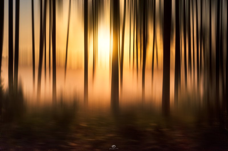 Hades  Forest  Trees  Haze  Magic Forest Light Magic forest of Hadesphoto preview