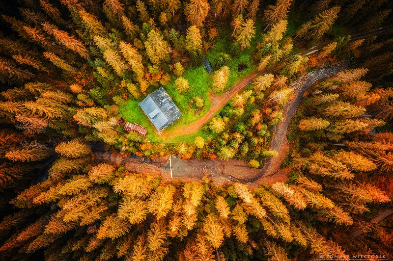 drone, poland, morning, sunrise, sunset, awesome, adventure, amazing, air, autumn, mavic, dji, landscape, countryside, forest, trees, shelter, above Alone in the forestphoto preview
