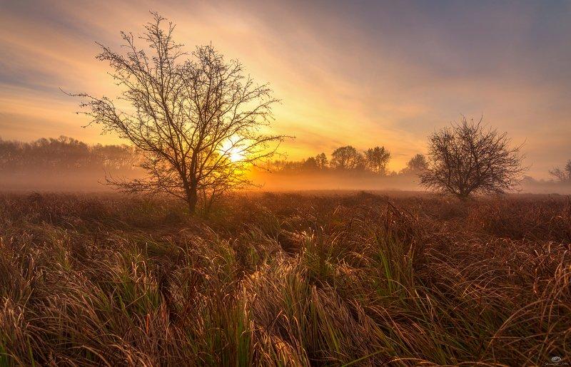 sunrise, dawn, fog, light, tree, grasses, landscape, nature, clouds, sun, golden hour, autumn, nikon, sky In pursuit of the golden hourphoto preview