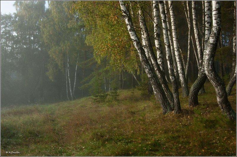 туман,утро,ранняя,осень Туман ранней осениphoto preview