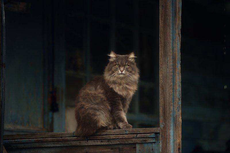 кот, пушистый, крыльцо На крыльцеphoto preview