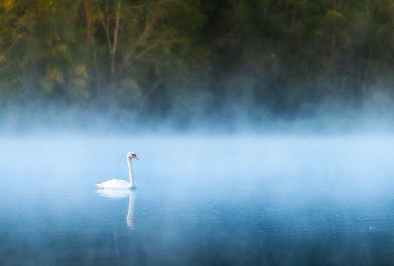Лебедьphoto preview