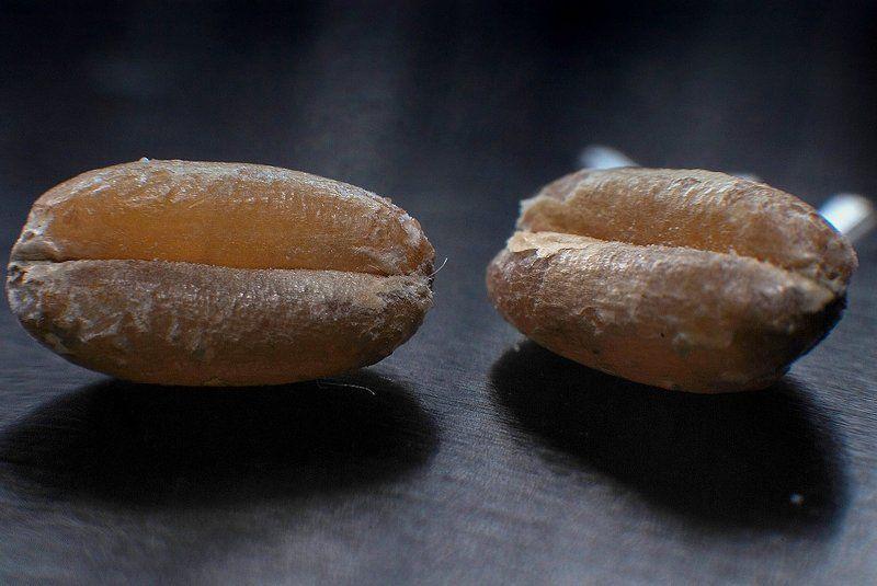 hello, loaf,привет,батон,макро,пшеница,зерно hello, loafphoto preview