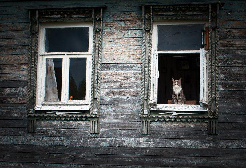 кошачий постphoto preview
