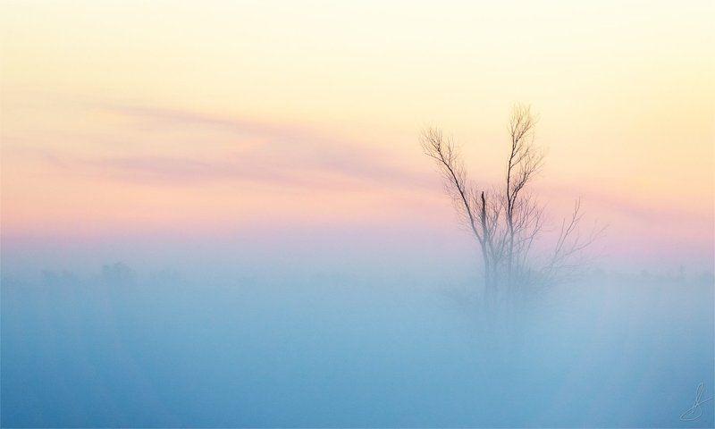 дерево, пейзаж, тишина, туман, утро, рассвет, андромеда Андромедаphoto preview