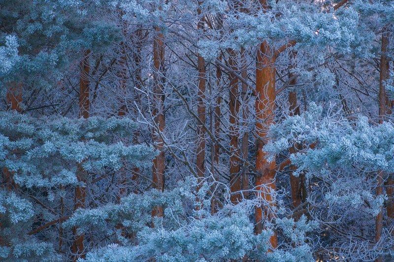 пермский край, зима, иней, пермь, урал, изморозь, пейзаж, сосны Инейphoto preview