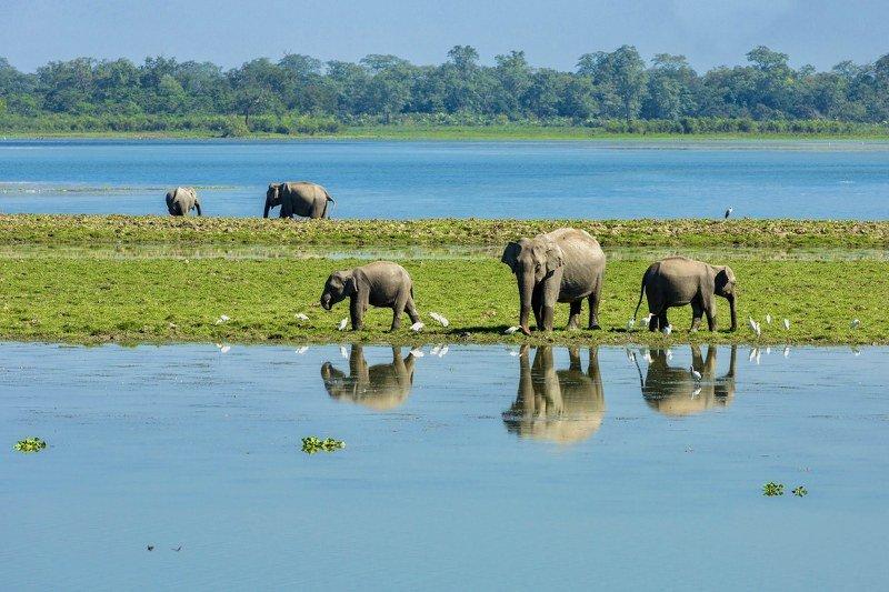 elephant wild India kaziranga water jungle forest reflection grassland  Wilt Reflectionphoto preview