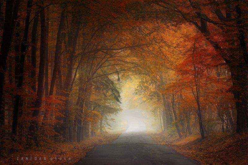 магия осени,магия ,осень, дорога, листья, краски осени, nikon d750, zanfoar, чехия,чешская республика магия осениphoto preview